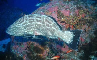 Como fisgar o consumidor para salvar espécies marinhas da sobrepesca