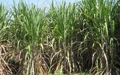 Ministro pede contribuição de empresários para novo plano de biocombustíveis