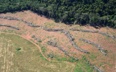 Desmatamento na Amazônia aumenta 24% em 2015