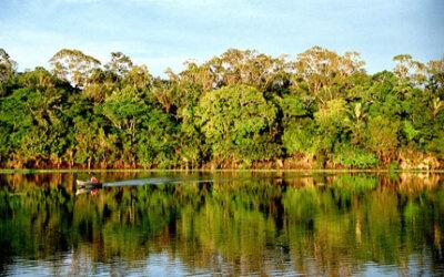 Floresta biodiversa produz mais, aponta estudo de alcance global