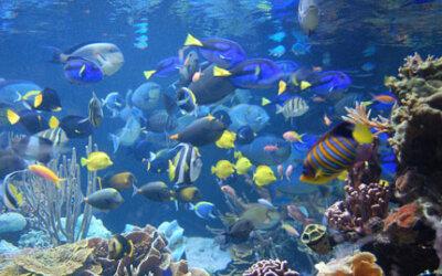 Pesca predatória: ficaremos sem peixes em nosso cardápio em 2048