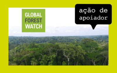 Empresas se unem para monitorar desmatamentos via satélite
