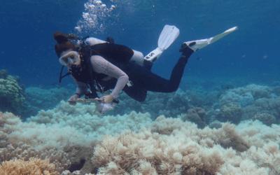 Aquecimento global ameaça a Grande Barreira de Corais da Austrália