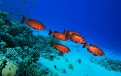 Aquecimento global está forçando a migração de peixes