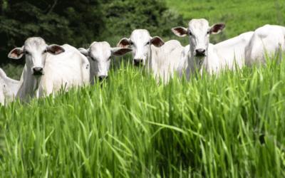 Consumidor informado pode influenciar nas condições de produção da carne