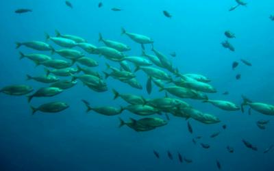 Projeto Pesca+Sustentável permite ao consumidor rastrear o peixe do mar ao prato