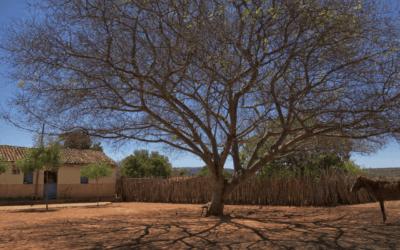 Brasil tem 917 municípios em crise hídrica