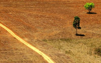 Nova plataforma digital do IBGE traz dados sobre o uso da terra em cada quilômetro do Brasil