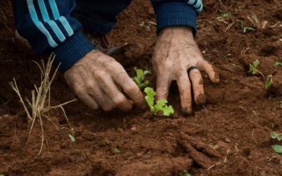 Bota na Mesa: Instituto Akatu marca presença em evento que promove a inclusão da agricultura familiar na cadeia de alimentos