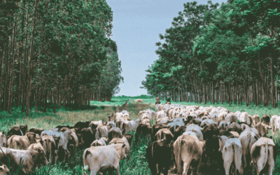 Folha de S. Paulo: A carne do seu prato vale o quanto pesa?