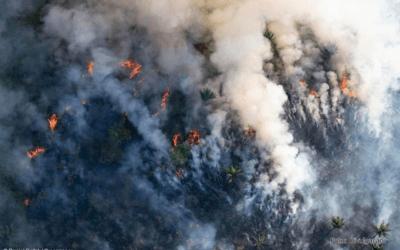 Queimadas na Amazônia: mitos e verdades