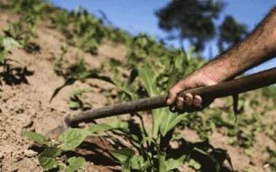 Folha de S. Paulo: Os agrotóxicos, a nossa saúde e a natureza