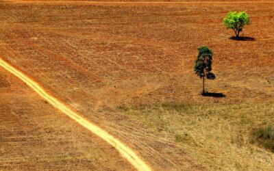 Dia da Proteção às Florestas: saiba o que você pode fazer para conservá-las
